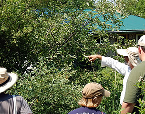 Mark points out the most successful apple varieties