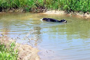 Family dog cools off in one of many pocket ponds